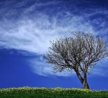 Tree and cloud by Hans Kawitzki