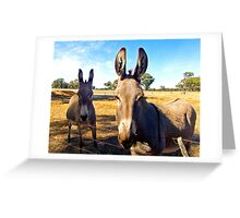 Donkey Hello Greeting Card