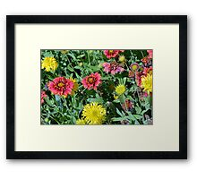 Colorful flowers in the garden. Framed Print
