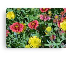 Colorful flowers in the garden. Canvas Print