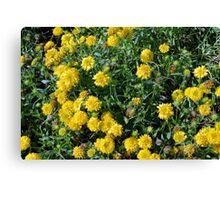 Bush of yellow flowers. Canvas Print