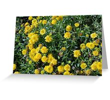 Bush of yellow flowers. Greeting Card