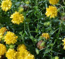 Bush of yellow flowers. Sticker