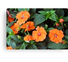 Orange flowers and green leaves. Canvas Print