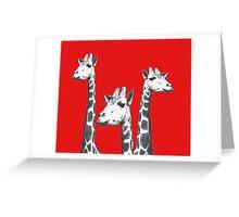 Pencil sketches of Three Giraffes portraits. Greeting Card