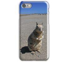 Sceptical squirrel at California 1 Highway iPhone Case/Skin