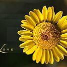 Shapes of LOVE by Joy Watson