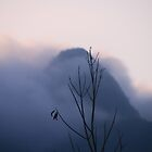 Mist-erious by indiafrank