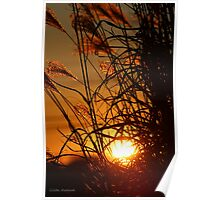 Winter Sunset in the Ornamental Grass Poster