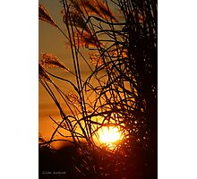 Winter Sunset in the Ornamental Grass Photographic Print