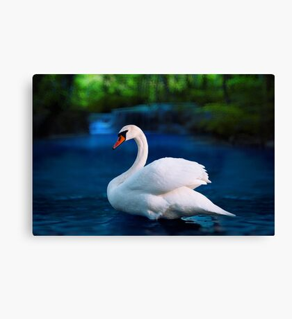 White swan in the lake with beautiful landscape Canvas Print