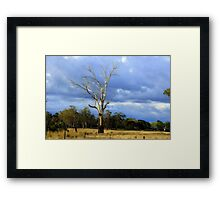 Rural Tasmania Framed Print