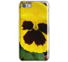 YELLOW TWO TONE PANSY iPhone Case/Skin