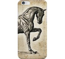Anatomical engraving of a horse iPhone Case/Skin