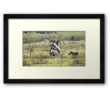 Rhino Mating Framed Print