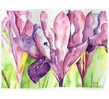 Water Iris Poster