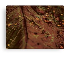 Lucid Nature Collection 4/10 Canvas Print