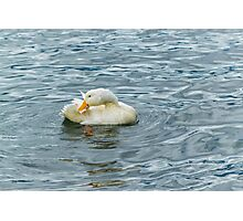 White Duck Preening at Lake Photographic Print