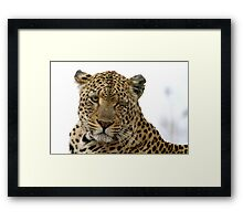 Can Leopards Wink? Framed Print