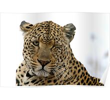 Can Leopards Wink? Poster