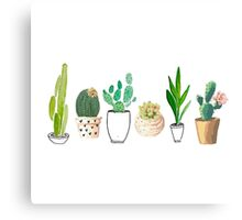 POTTED CACTI Canvas Print