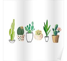 POTTED CACTI Poster
