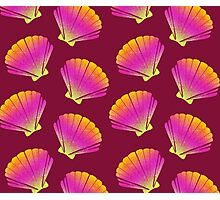 Pink Shell Photographic Print