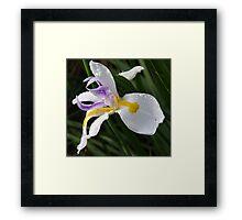 Fairy Iris II Framed Print