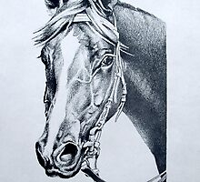 Handsome: Vain (Aust) Racehorse by Patricia Howitt