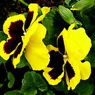 Cute Pansy Pair by kathrynsgallery