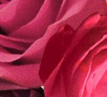 Pink Rose Trio Sticker