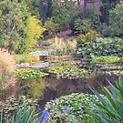 Lily Pond in Autumn - Hobart Botanical Gardens by TonyCrehan