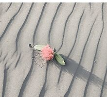 pohutukawa flower on grey wind rippled sand by brians101