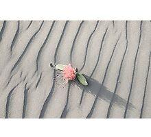 pohutukawa flower on grey wind rippled sand Photographic Print