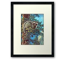 Treed Raccoon Lake Tahoe  Framed Print