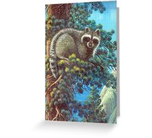 Treed Raccoon Lake Tahoe  Greeting Card