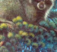 Treed Raccoon Lake Tahoe  Sticker