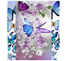 Colours of Butterflies Poster