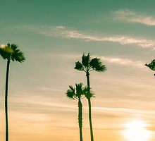 Retro image sun setting on horizon through tropical palms. by brians101