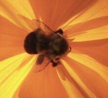 Bumblebee Silhouette Sticker