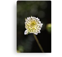 Dahlia Love Canvas Print