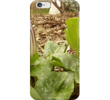 Can Someone Name this Plant. Growing in my garden. Adelaide Hills. iPhone Case/Skin
