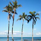 Four palms  by zumi