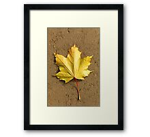 Maple leaf in autumn Framed Print