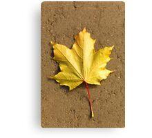 Maple leaf in autumn Canvas Print