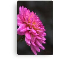Hot Pink Dahlia Drama Canvas Print