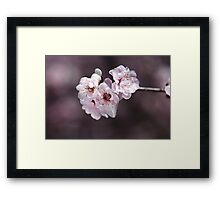 Over a Blossom Cloud Framed Print