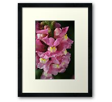 Wonderful Snapdragon Framed Print