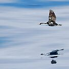 Reflections On The Wing by CBoyle