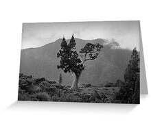 Pencil Pine & Mt Oakleigh Greeting Card
